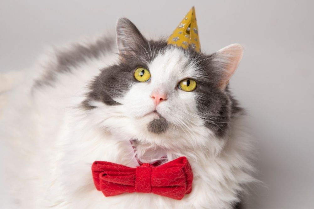 fluffy feline with a gold party hat and red bow tie