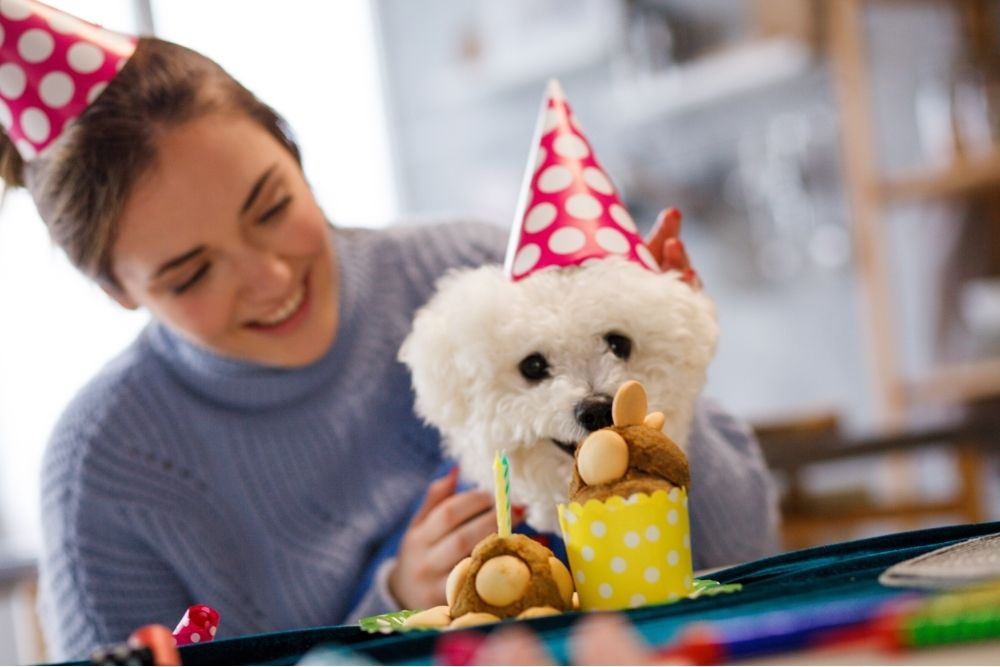 Canine in front of a cake with their owner