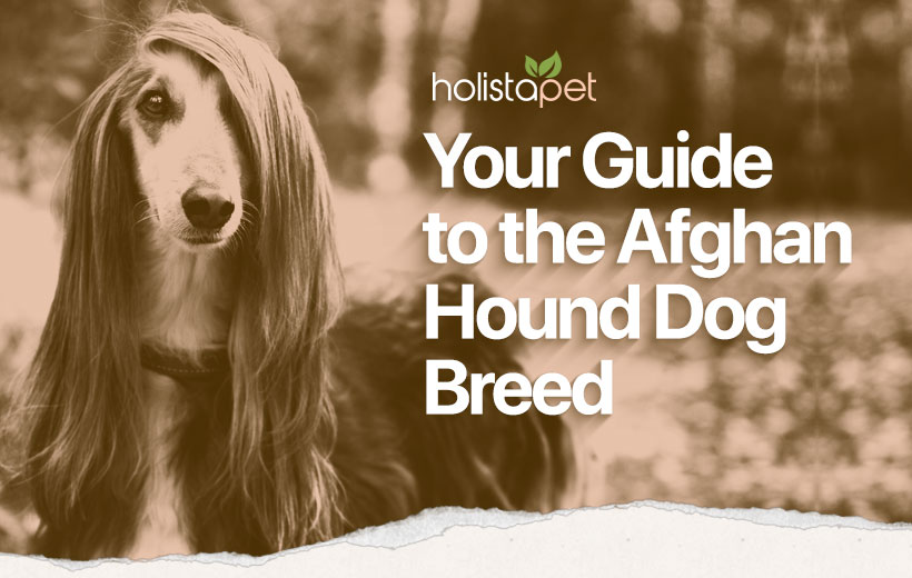 "a dog with long hair covering its face and text ""your guide to the afghan hound dog breed"""