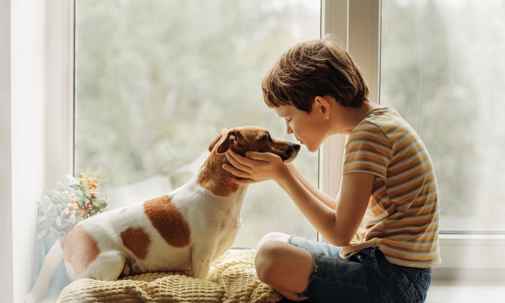 young child and his jack russell terrier dog