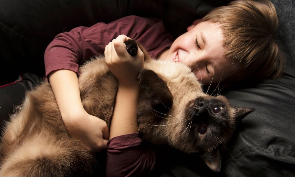 a boy hugging a cat on the sofa