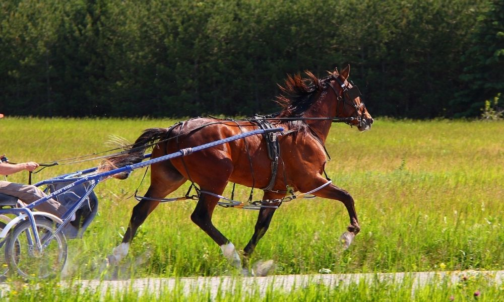 beautiful brown horse running with carriage