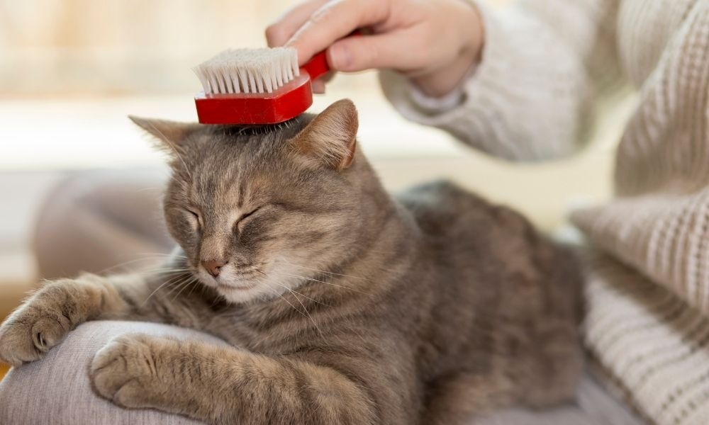 a cat laying on a person's lap getting brushed