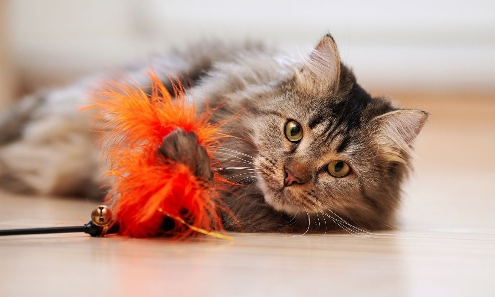 a cat playing with an orange feather toy