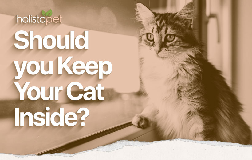 "a cat staring out the window with text ""should you keep your cat inside?"""