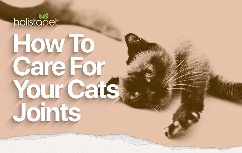 cat joint care guide featured blog image