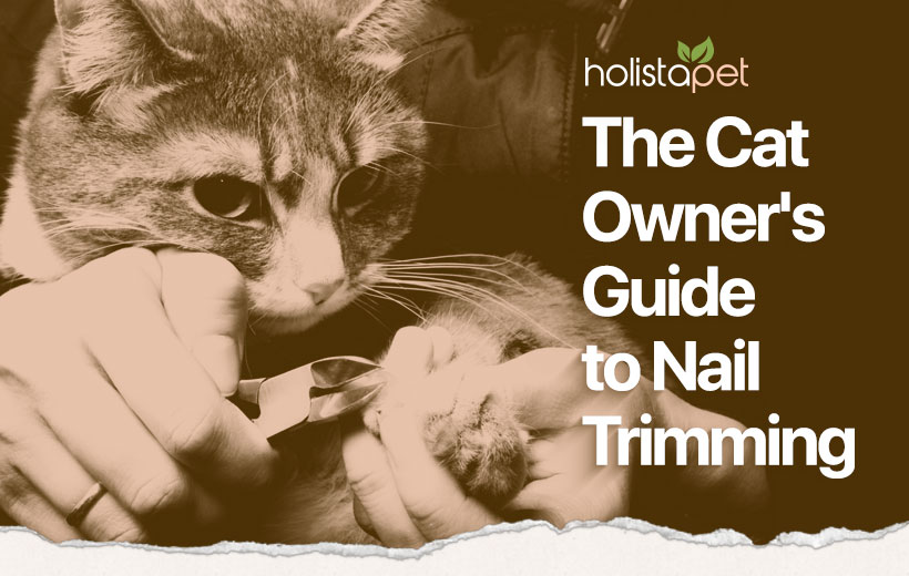 "a cat getting their nails trimmed with text ""the cat owner's guide to nail trimming"""