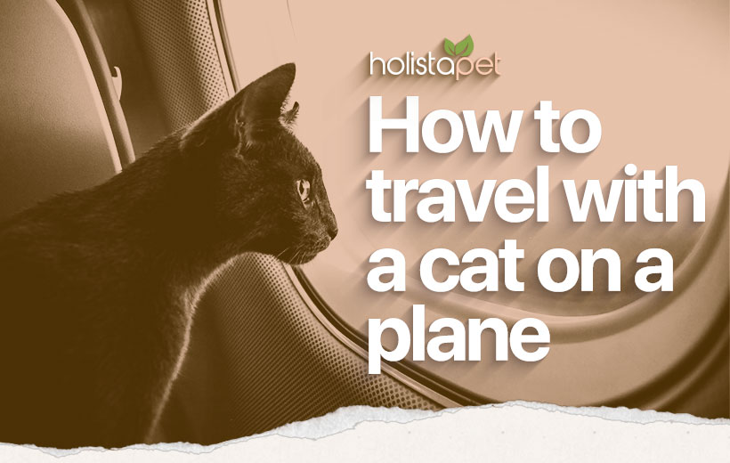 How To Travel With A Cat On A Plane featured blog image