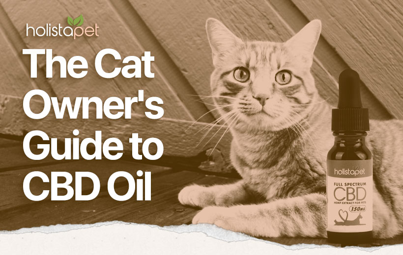 "a cat aying next to a bottle of cannabidiol tincture with text ""the cat owner's guide to cbd oil"""