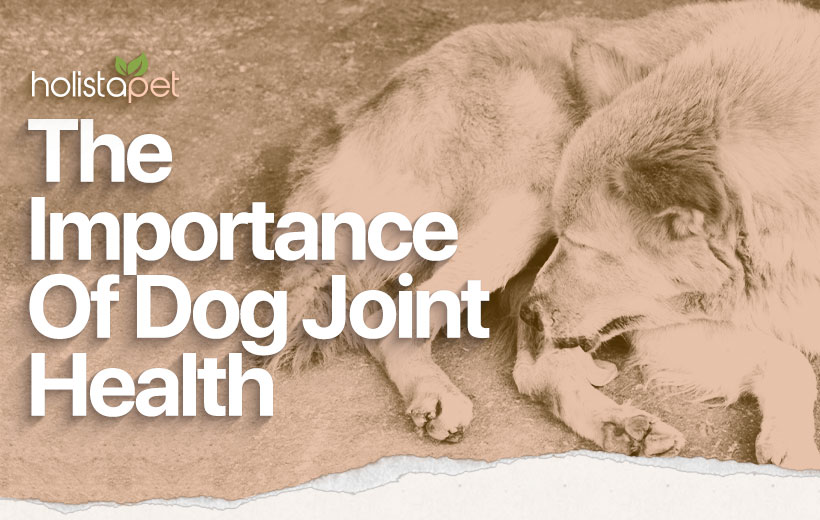 Dog Joint Health Care