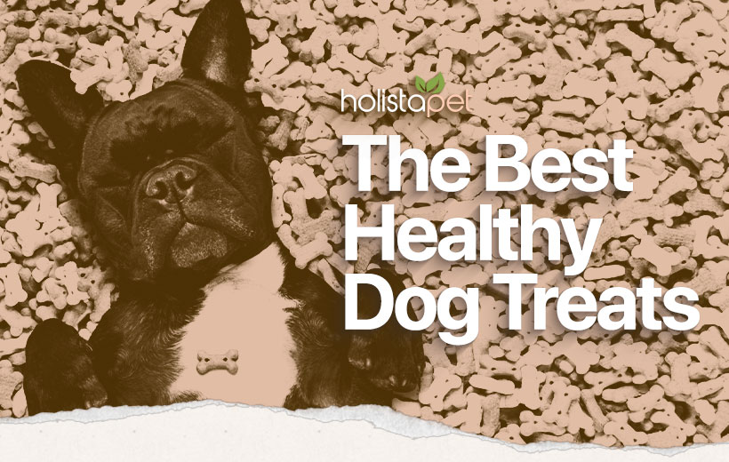healthy dog treats featured blog image