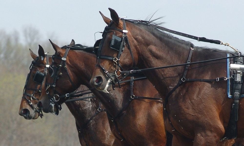 three brown horses pulling a wagon outside