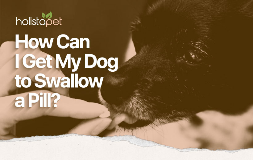 how to get a dog to swallow a pill