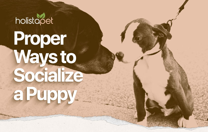 how to socialize a puppy featured blog image