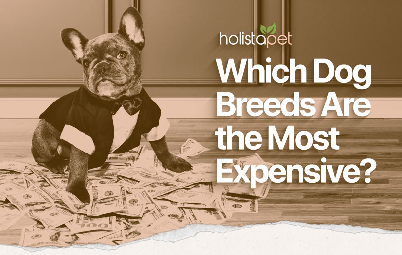 most expensive dog breeds featured blog image