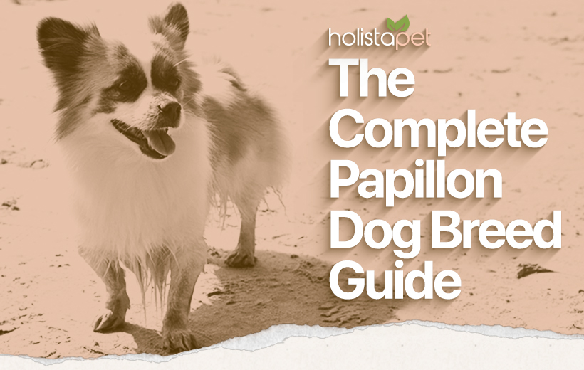 "a puppy with text ""the complete papilion dog breed guide"""