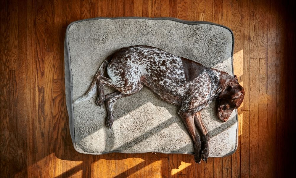 a brown dog sleeping peacefully on its bed