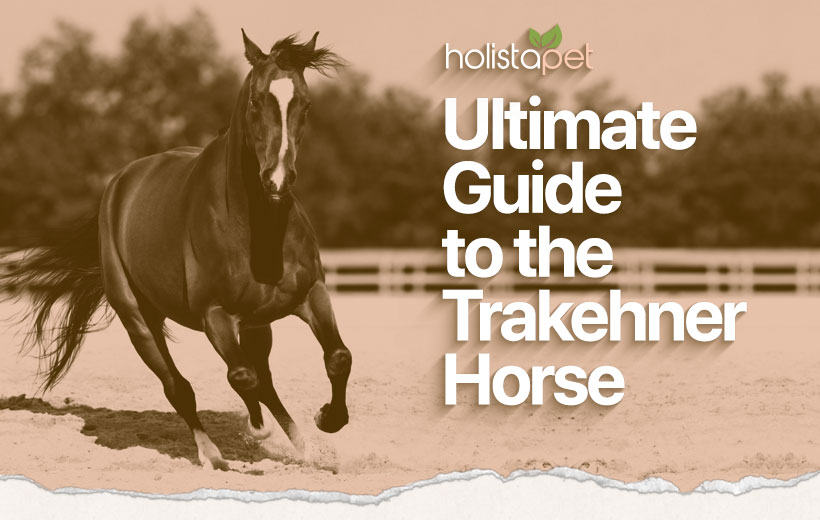 "a black hors galloping in a ring with text ""ultimate guide to the trakehner horse"""