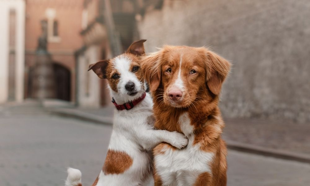 two lovely dogs hugging in the city