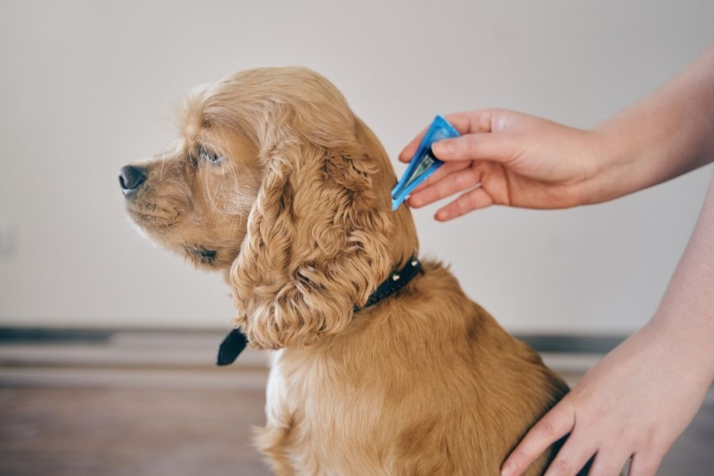 home remedies for dogs