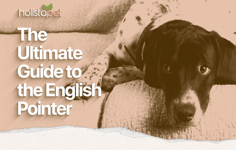 """a black and white spotted dog with text """"the ultimate guide to the english pointer dog"""""""