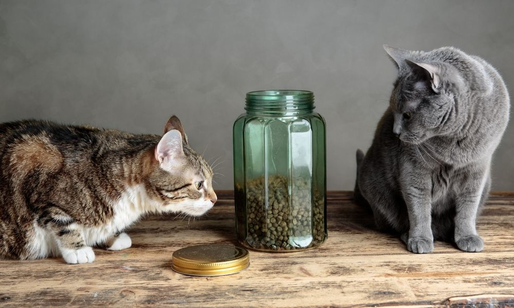 two felines staring at a jar of cat food